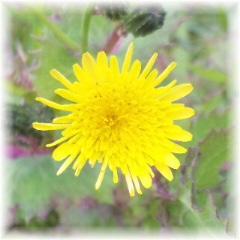 癒しの花を…