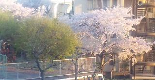 桜ひとひら